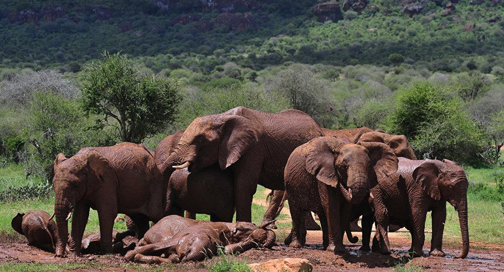 南非國家公園的一頭大象殺死一名偷獵者