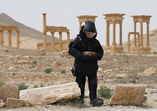 俄工兵在巴爾米拉排雷工作第一天發現120多個爆炸物
