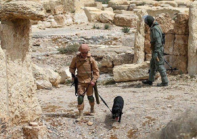 俄工兵在敘巴爾米拉排除1.8萬爆炸物 已開始為居民區排雷