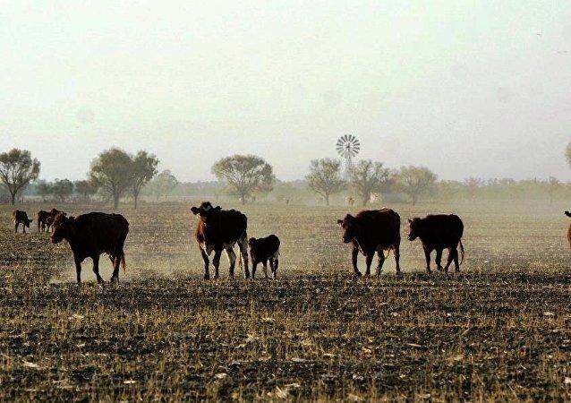 中國外交部證實暫停接受4家澳大利亞企業肉類產品的進口申報
