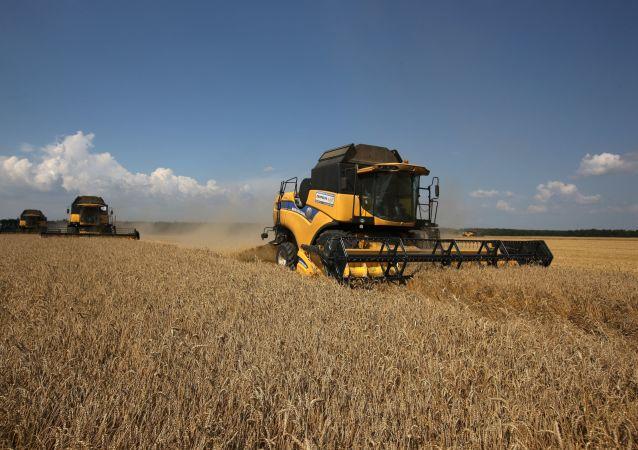 俄農業監督署:俄擬增加對印尼穀物出口