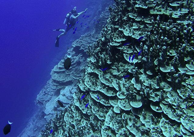 中國外交部:日本對衝之鳥礁海域的聲索嚴重損害國際社會共同利益