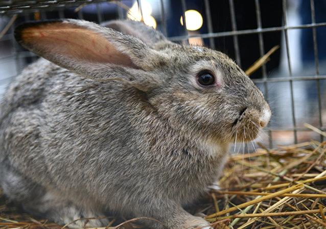 科學家稱冠狀病毒可能會感染除鼠類以外的所有哺乳類動物