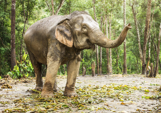 印度大象踩死一名正在拍照的女性
