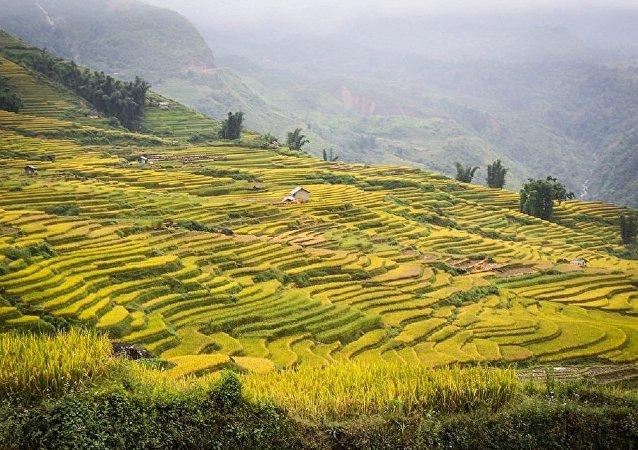 水稻傳播與古時發生的生態災難有關