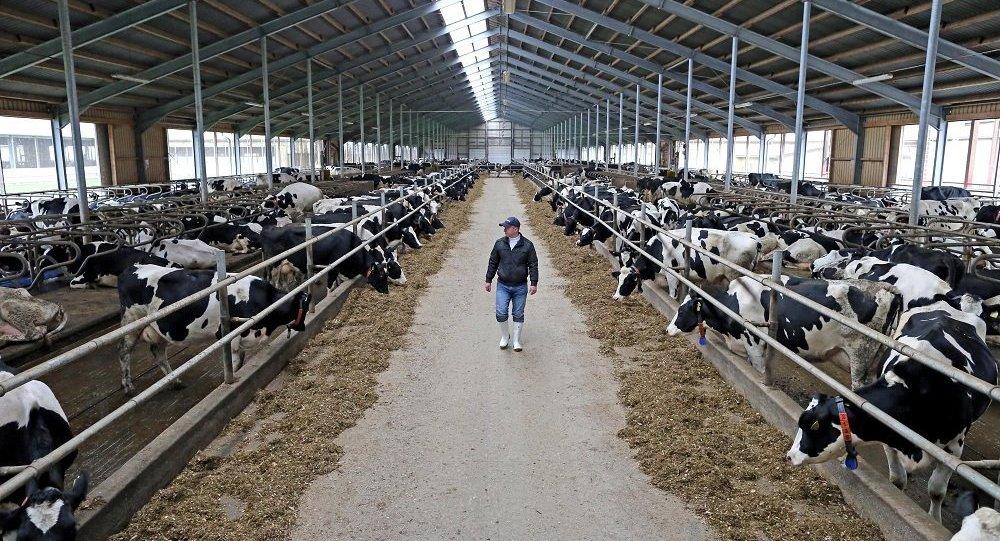 俄羅斯農場