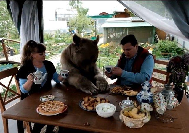 棕熊在俄羅斯家庭受寵