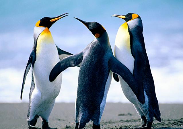 世界最大的企鵝帝國已有近90%企鵝死亡