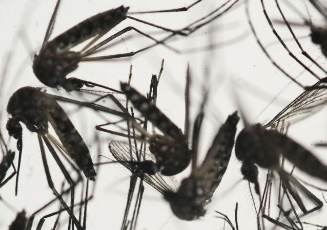 世界衛生組織已確認67個國家有寨卡病毒傳染病例