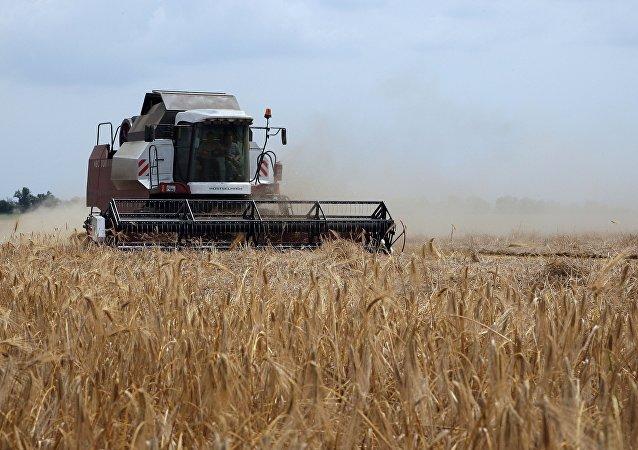 俄農業部長:2018年俄穀物收成達1.1億噸