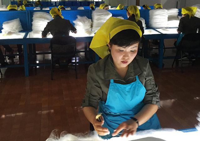 俄內務部:俄羅斯無意限制朝鮮移民入境或在俄務工