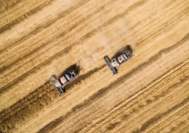 俄鐵8月穀物總裝運量和出口裝運量創新高