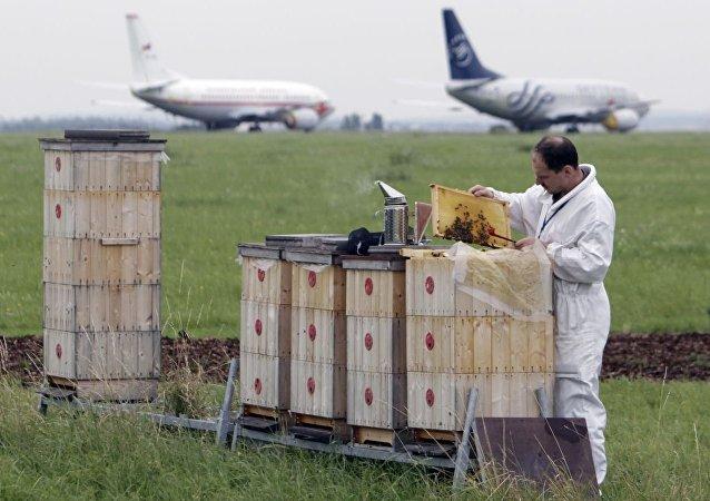 蜂箱在捷克機場