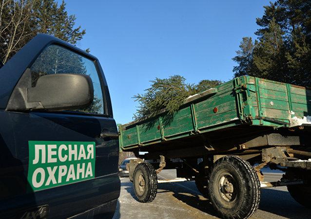 媒體:俄羅斯林務員可等同於警察
