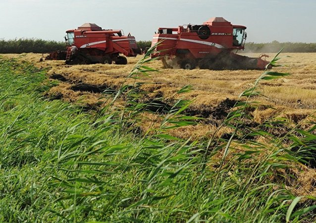 媒體:將在中國建成採用俄技術的稻殼加工廠