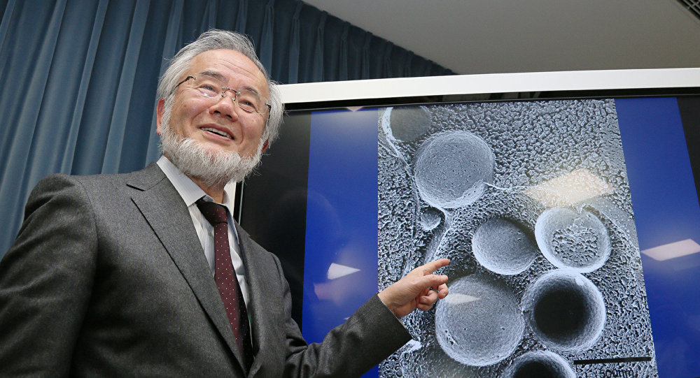 研究細胞自噬機制的日本科學家獲諾貝爾醫學獎