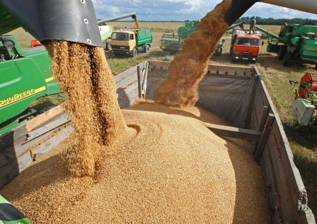 俄農業部:俄2017至2018農業年可以出口5000萬噸的穀物