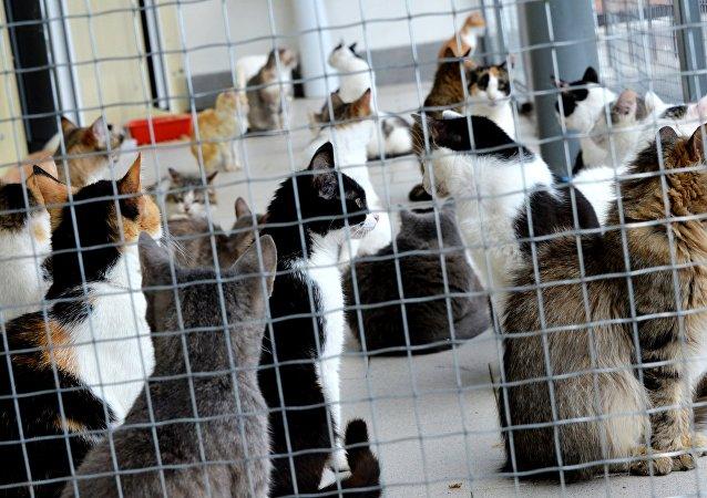 英國記者講述俄羅斯貓咪的救星