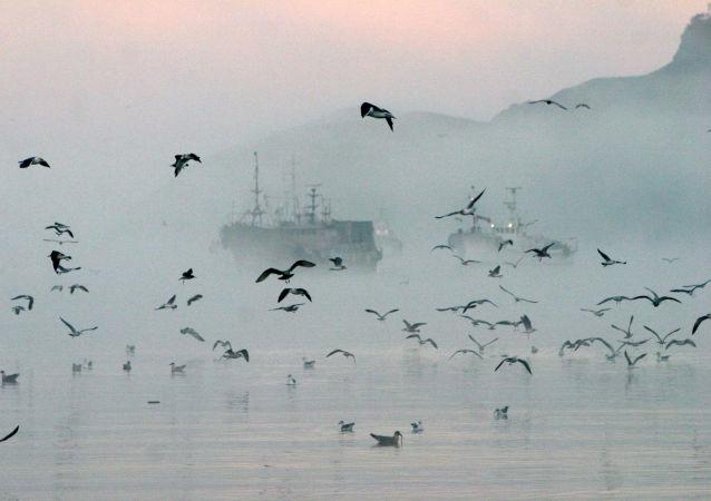 俄濱海邊疆區逮捕5名在俄水域非法捕蟹的朝公民