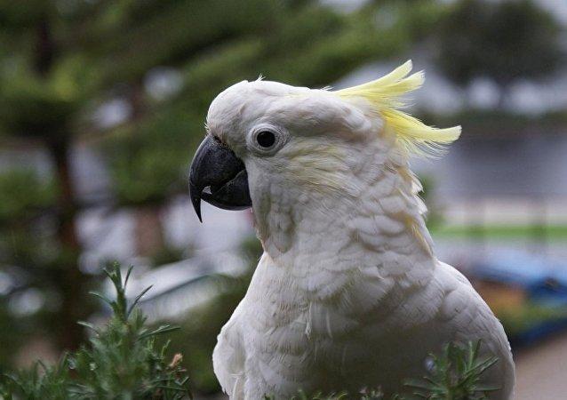 美國一名罪犯在被允許帶著他的寵物鸚鵡一起進行拘留拍照
