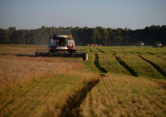 中國農業部: 中俄應幫助對方的綠色農產品進入本國市場