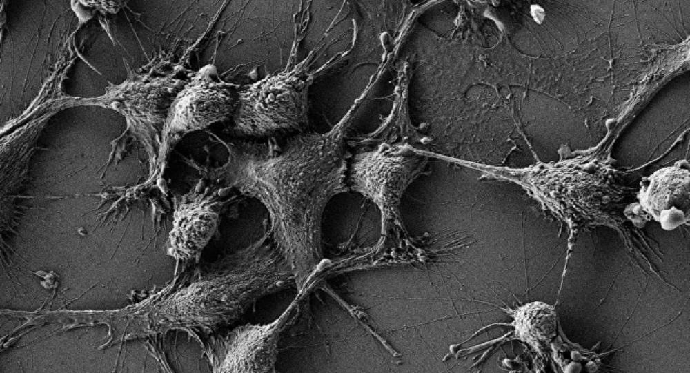 老鼠含二氧化鈰納米粒子的細胞