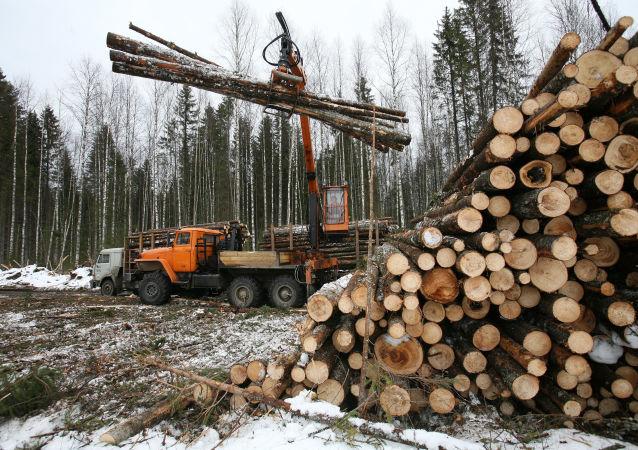 上半年滿洲里口岸進口俄木材近600萬立方米