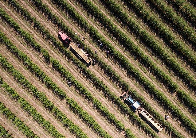 俄中兩國應討論建設大型現代農業企業問題