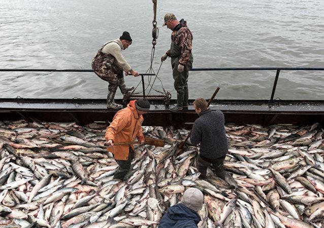 俄堪察加邊疆區建立首座漁業碼頭
