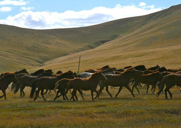 蒙古人捐贈馬匹助國家還債