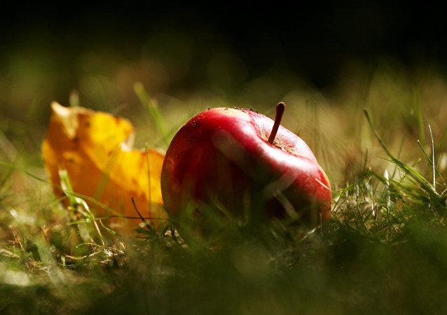 蘋果著色誰說了算?科學家有新發現