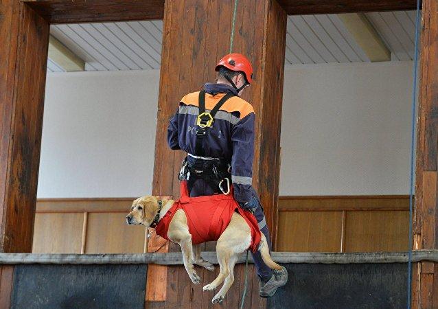 莫斯科搜救犬數量將增加一倍