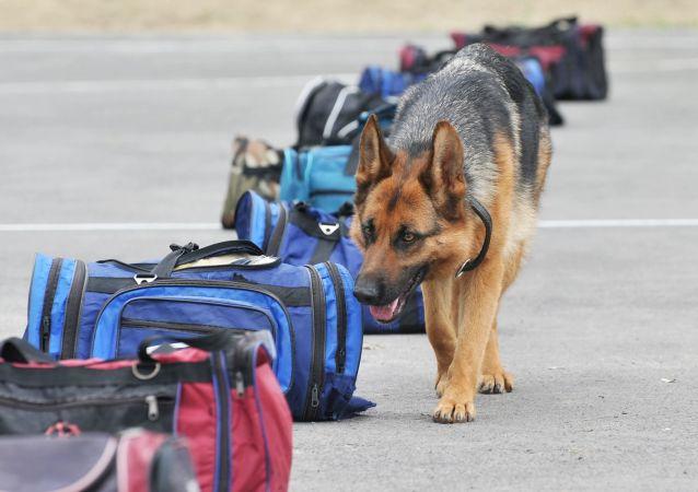 維也納市為警犬發放隔熱靴