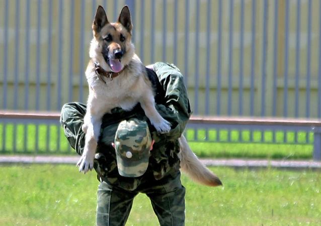 俄羅斯警犬