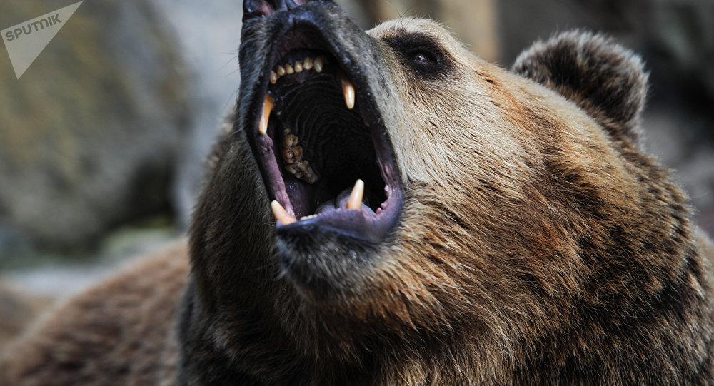 咬熊的舌頭!一名圖瓦居民在針葉林中與熊激鬥並活了下來