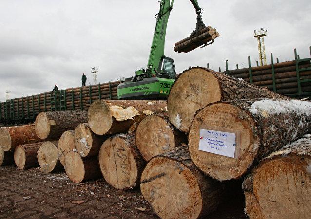 俄自然資源部長建議設立俄中木材交易所