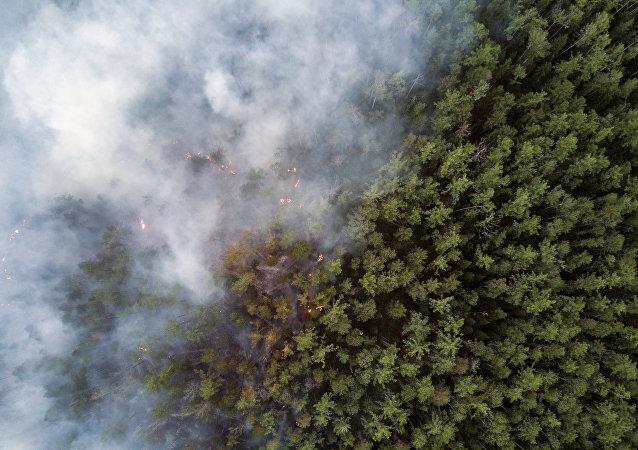 俄外貝加爾邊疆區政府現金懸賞追查林火事故責任人下落