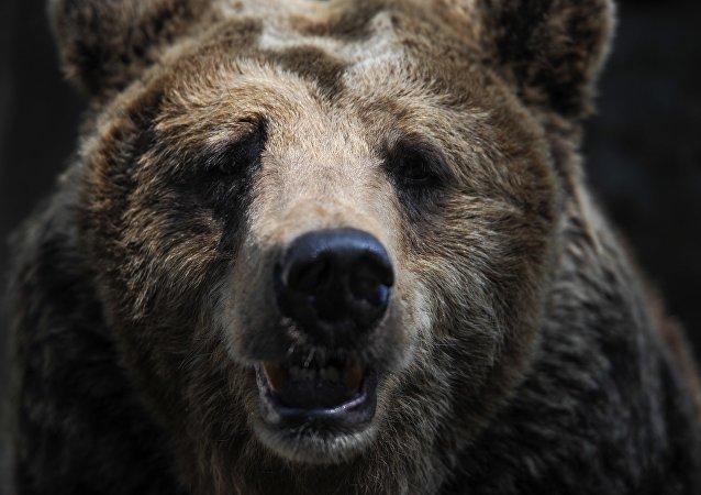 俄羅斯熊將成為戰略資源