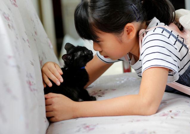 你不在家貓怎麼辦?日本推出鏟屎官服務平台