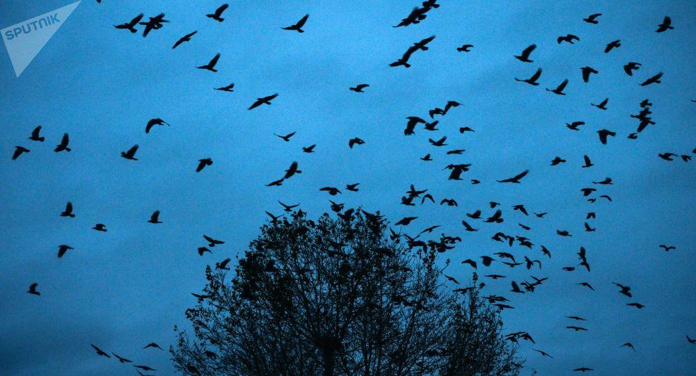 媒體:北美鳥類數量半世紀減少約30%