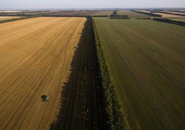 改良農耕每年可減排10億噸溫室氣體最新發現與創新