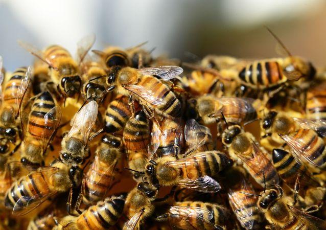 800只蜜蜂在俄烏邊境被攔下