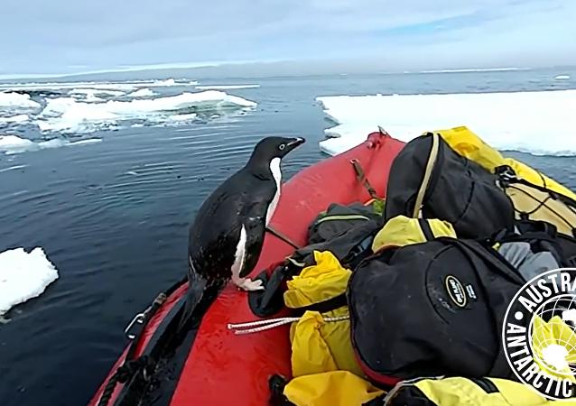 企鵝造訪南極學者被拍下