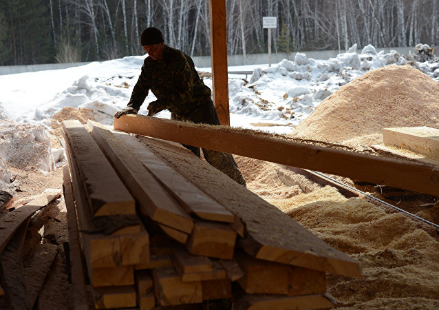 Заготовка леса в Новосибирской области