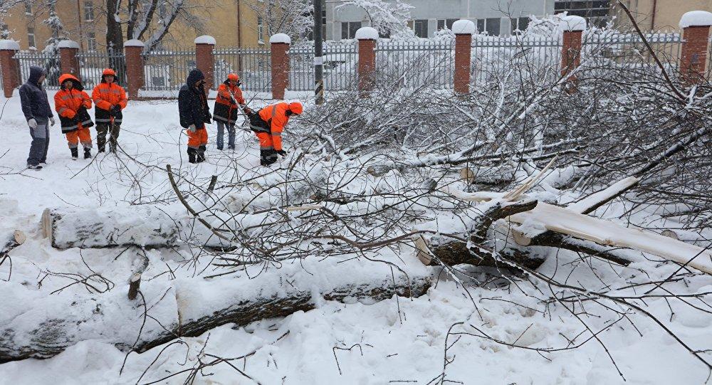 莫斯科副市長:該市大雪造成100多起樹倒砸車事件俄羅斯