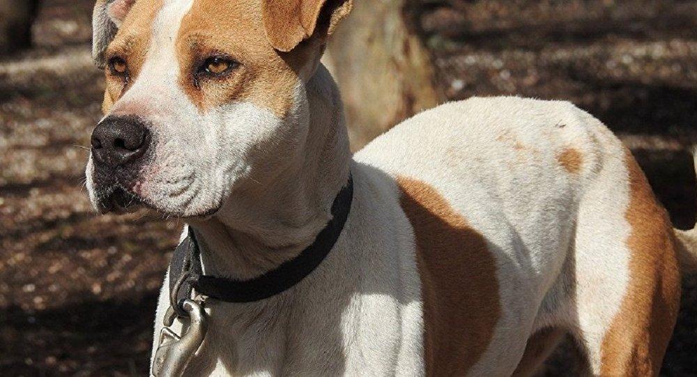 美國的一條狗「開槍打傷」了自己的主人