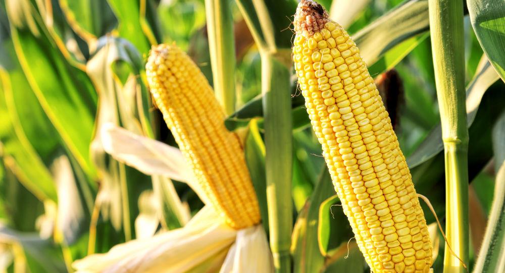 俄羅斯將擴大對華農產品出口