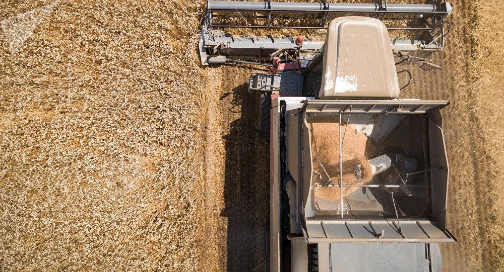 美國農業部:俄羅斯在2019-2020農業年將保持世界小麥出口領先地位