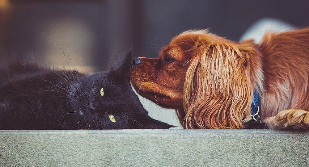 英國禁售小貓小狗