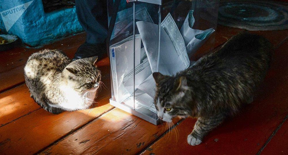 動物保護者們打算在俄羅斯建第一座貓咪收容所